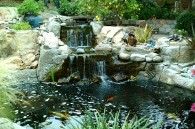 Pond B